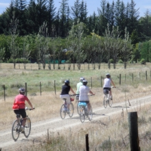 Cyclists on the Otago Rail Trail