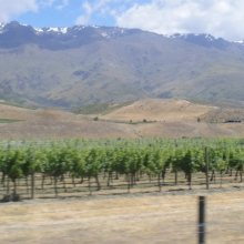 Wineries line the roads in the Southern Lakes district
