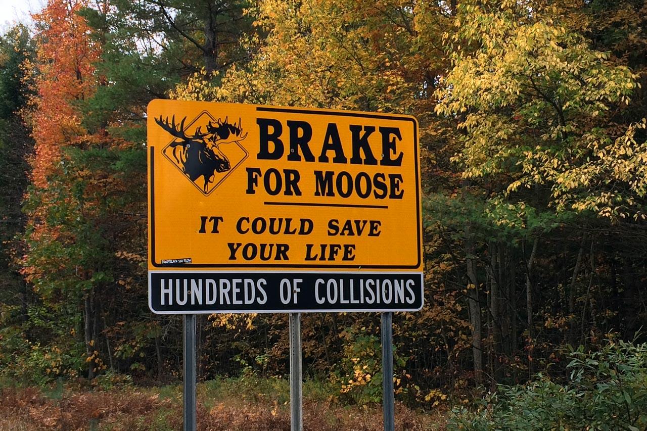 Brake4Moose