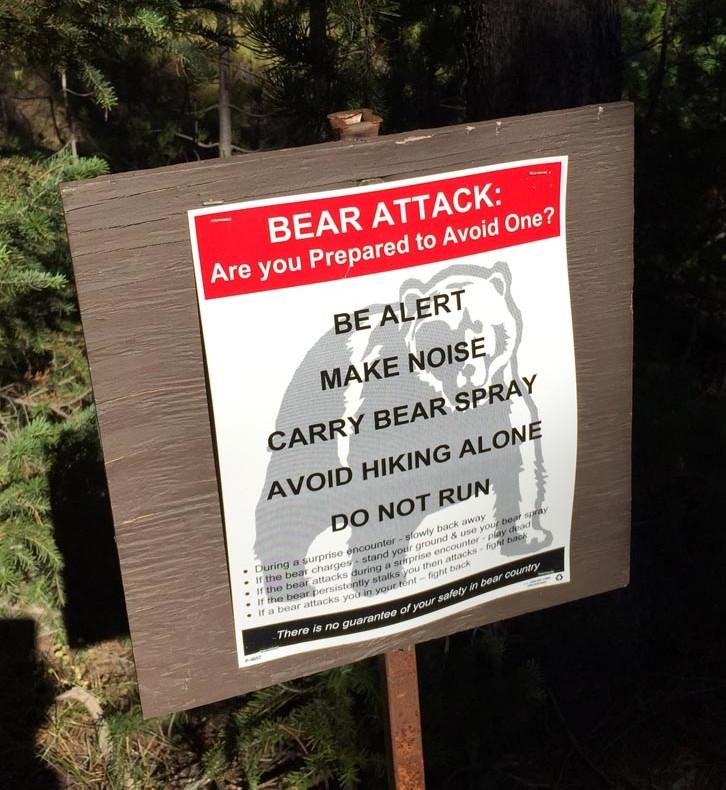 Bear Sign 4
