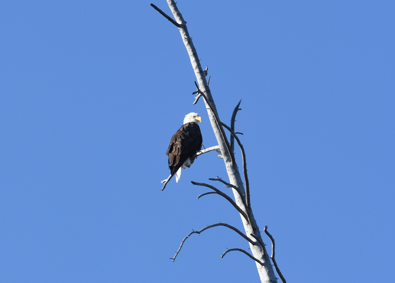 Eagle-Teton