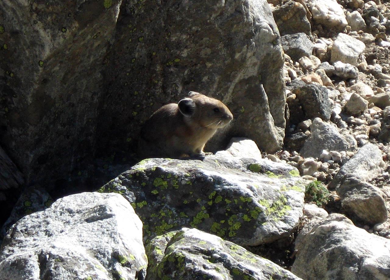 Pika-Cascade Canyon-JW